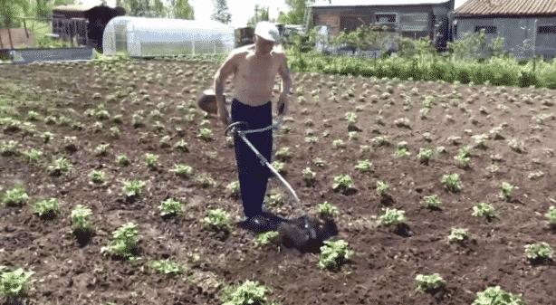 Прополка картошки триммером